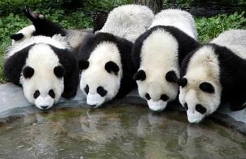 ブログ記事トップ画像‗パンダ