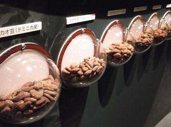 チョコレート展_カカオの種