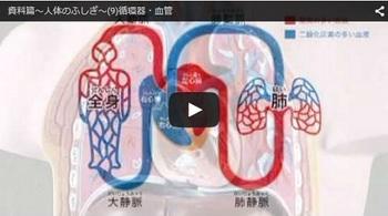 血液の循環動画001.jpg