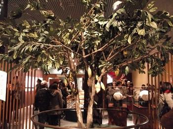 チョコレート展_カカオの木